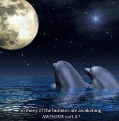 cropped-dolphins-moon6.jpg