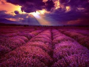Lavender & sky