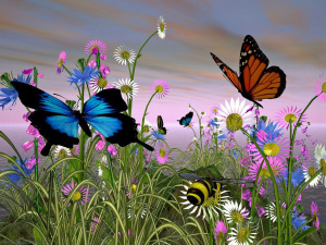 butterfly-8205