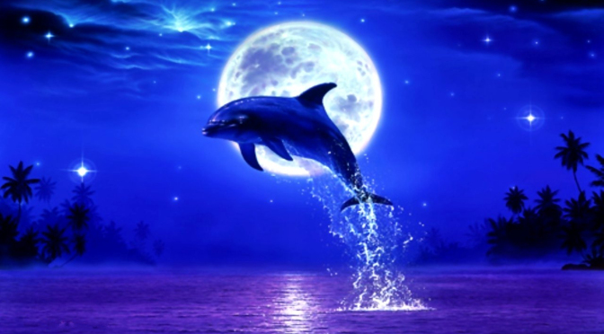 dolphin-full-moon